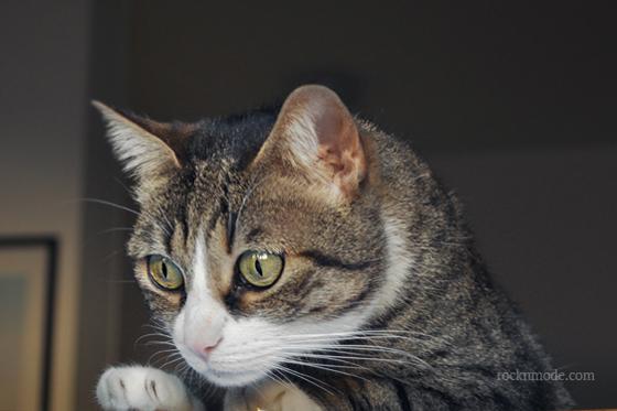 Pet's Planet – Dieta personalizzata per il mio gatto: prime impressioni