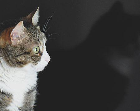 Pet's Planet – Dieta personalizzata per il mio gatto: risultati